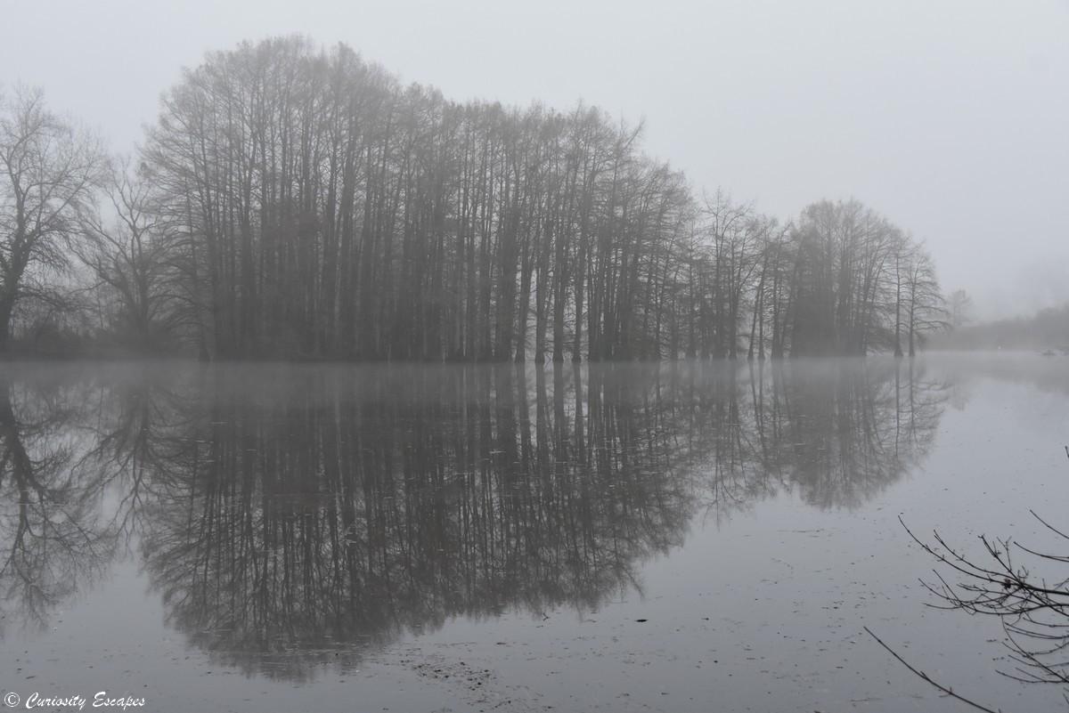 Effetto specchio del cypress calvo in inverno