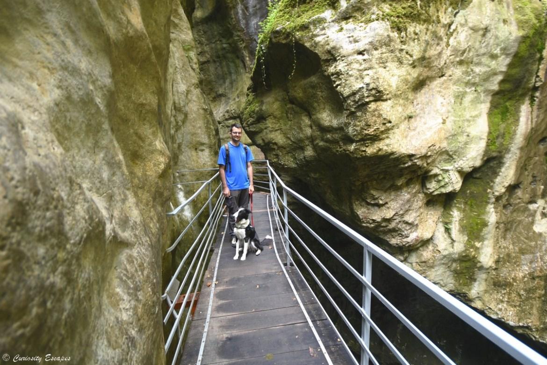 Visite des gorges du Fier avec son chien à Annecy