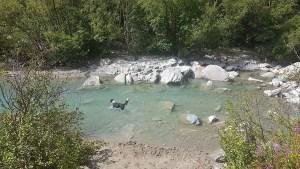 Chien se baigne dans la rivière à Bonneval sur Arc