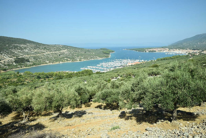 Ville et port de Cres sur champs d'oliviers, île de Cres en Croatie