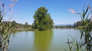 ENS des étangs de la Serre, Isère