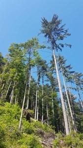 Forêt du Pas du Curé, randonnée Vercors