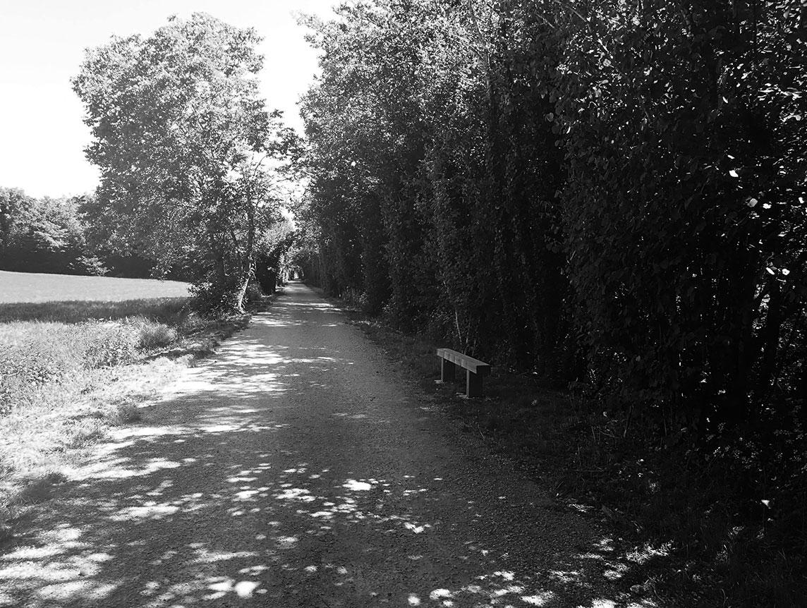 Voie cyclable à l'ombre des arbres