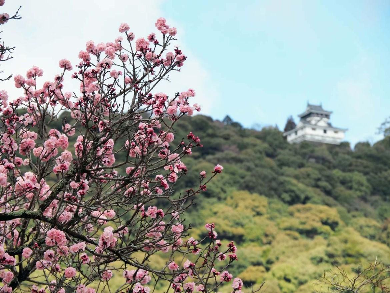 Château d'Iwakuni devant les cerisiers, Japon