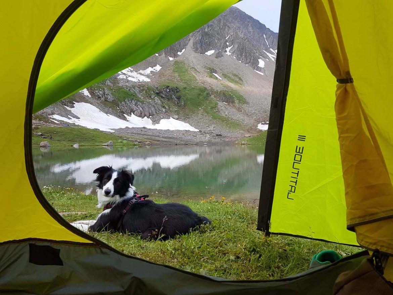 Chien devant la tente, bivouac au bord du lac d'Amour, Savoie