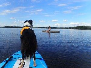 Faire du cani-paddle en Suède sur le lac Asnen