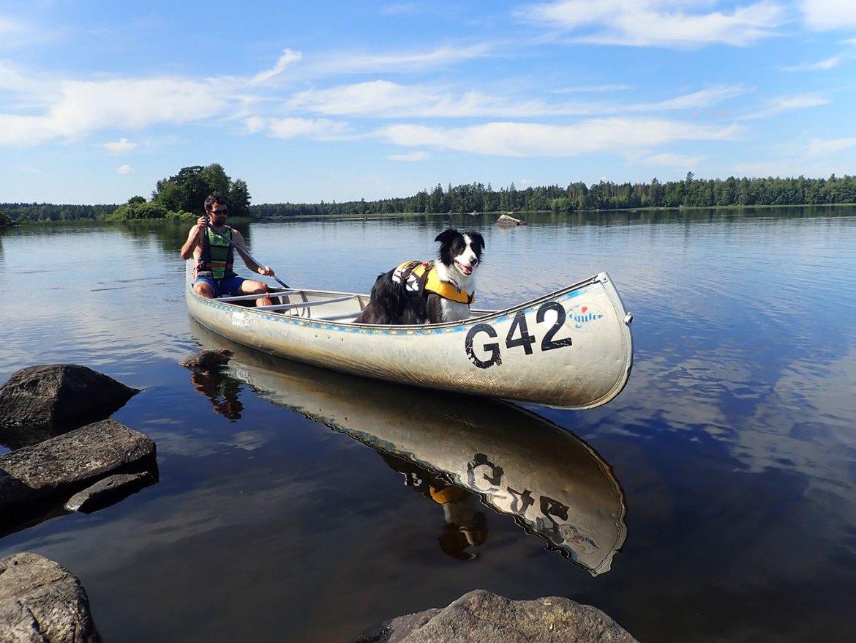 Faire du canoé avec son chien dans le parc national d'Asnen en Suède