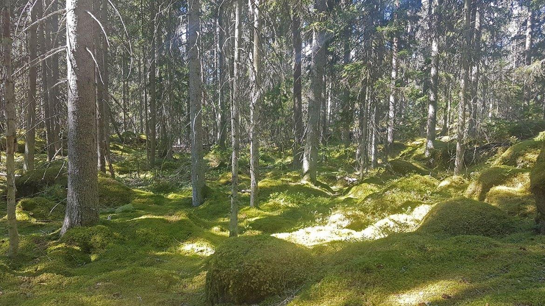 Parc national de Norra Kvill en Suède