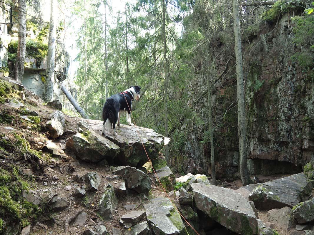 Randonner avec son chien en Suède