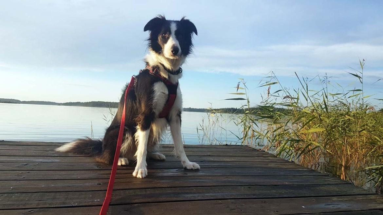 Voyager en Suède avec son chien