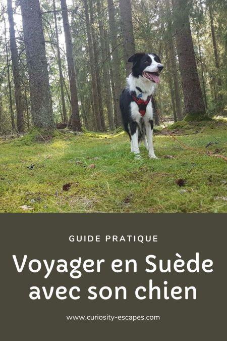Guide pratique pour voyager avec son chien en Suède. Un road trip mémorable.