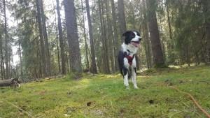 Faire un road trip en Suède avec son chien