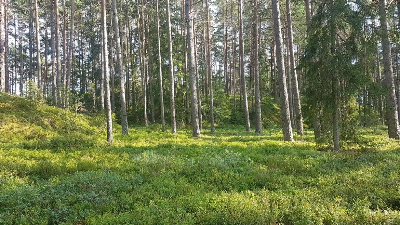 Forêt de mousse de Store Mosse, Suède