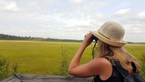 Observer les animaux dans le parc national de Store Mosse, Suède