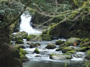 Gorges de Kikuchi dans une forêt de mousse au Japon
