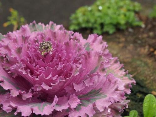 Fleur en forme de chou