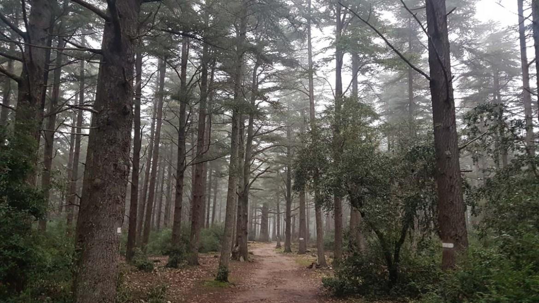 Forêt des cèdres du Luberon