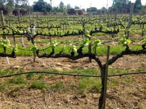 J Vineyard and Winery
