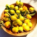 DaVero vineyard lemons