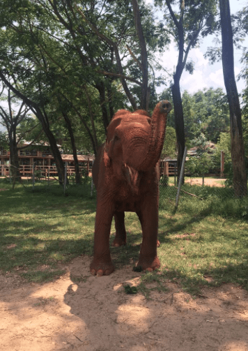 where to see elephants in thailand