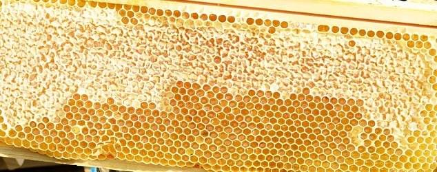 Distillato di miele di Arancio Terrantiga