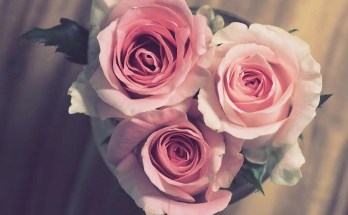 Rosolio di petali di rose ricetta