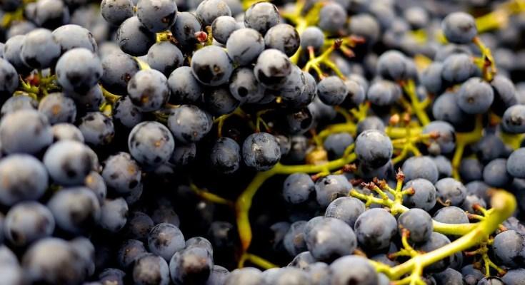 Confettura di uva fragola ricetta