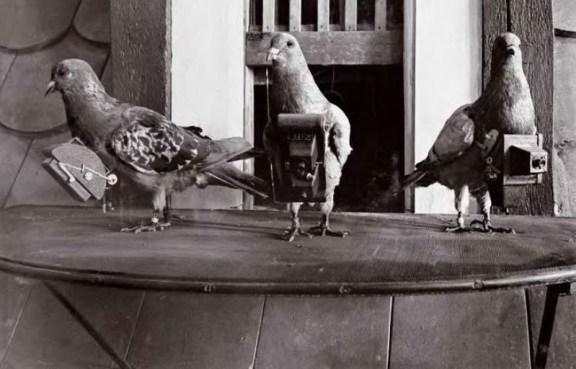 pombos-fotografos