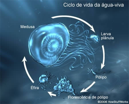 jellyfish-8[1]