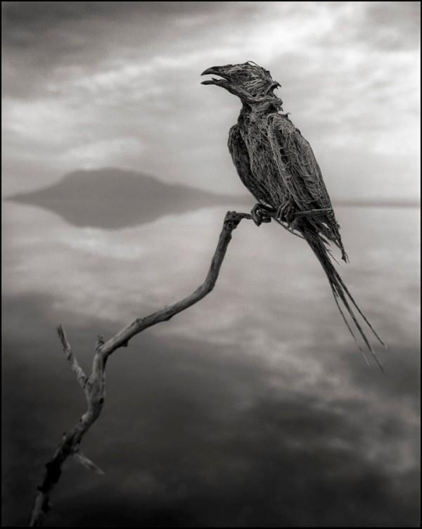 nb_calcifiedsongbird-11_lr-600x752[1]
