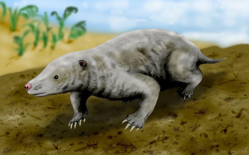 Uma das concepções artísticas do ancestral dos mamíferos