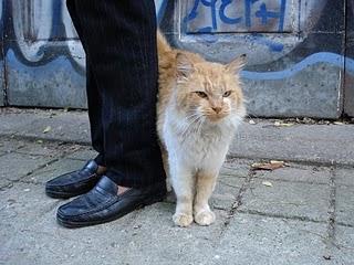 Gato+Rocando+Perna