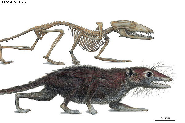 fossilp(2)[1]