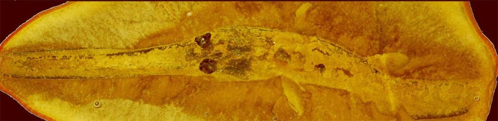 image_1678_2e-Bandringa-shark[1]