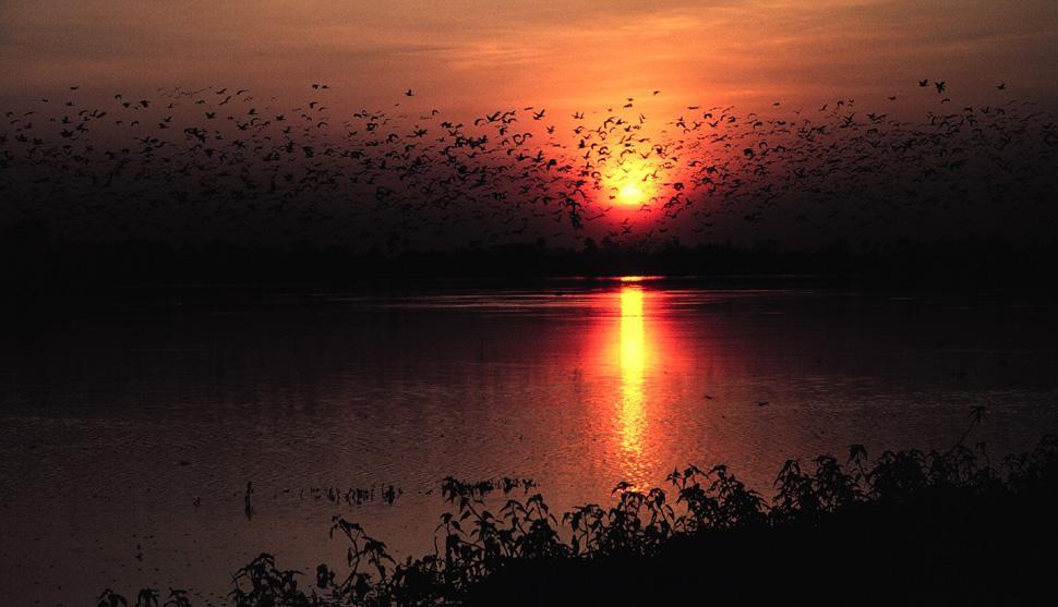 Venezuela. Vista tranquila do pôr do sol atrás das silhuetas dos pássaros voando.
