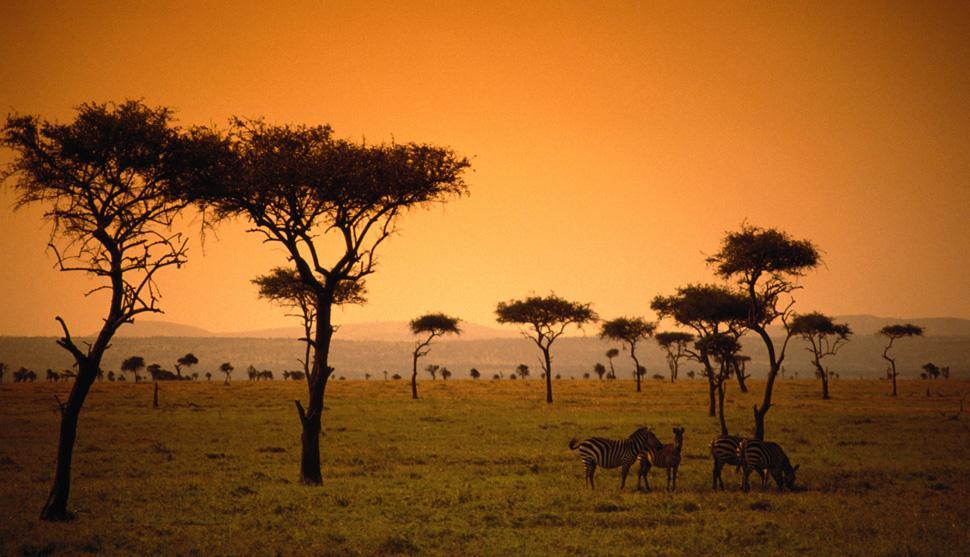 Animais pastando nas grandes planícies do Quênia, sob o céu laranja do entardecer.