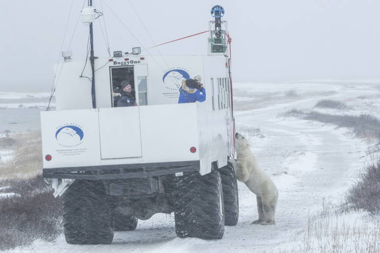 Polar-Bear-and-Tundra-Buggy-Trekker[1]