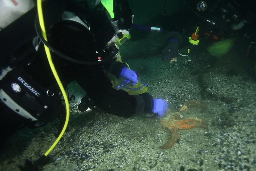 estrela-do-mar2