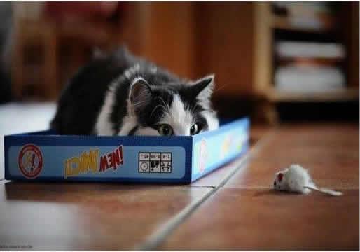 gato-cacando[1]