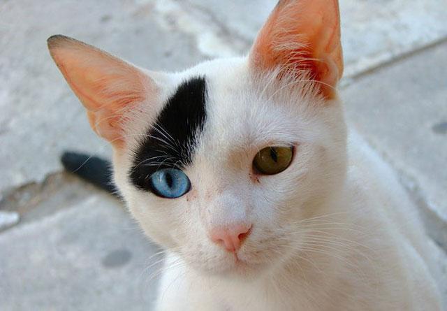 gato-comportamento-animal-planet[1]