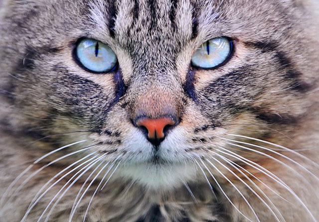 gato3-comportamento-animal-planet[1]