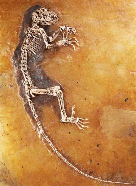 ida-fossil-g[1]
