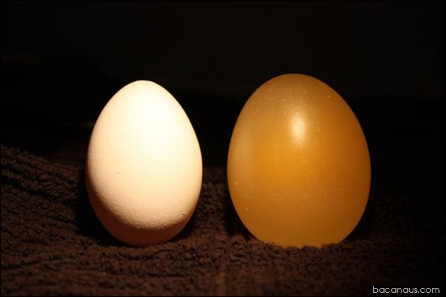 what_happens_to_an_egg_submerged_in_vinegar_640_12_thumb[1]