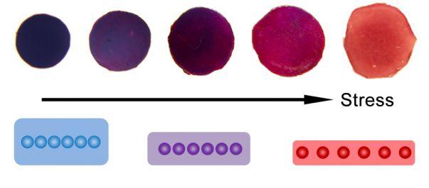 As imagens digitais mostrando a mudança de cor do filme do sensor depois de experimentar diferentes quantidades de pressão.