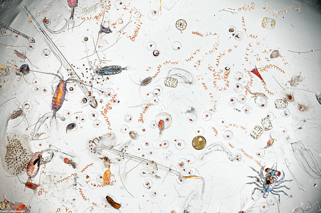 scoop-of-water-magnified[1]
