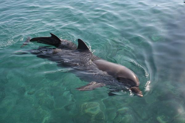 Eilat_-_Dolphin_reef[1]
