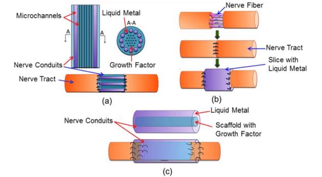 liquid-metal-nerve[1]