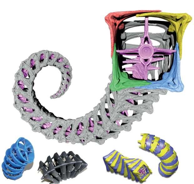 Modelos da estrutura da cauda de cavalos marinhos e versões arredondadas utilizadas no estudo.