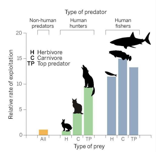 Um gráfico que mostra a taxa na qual exploramos herbívoros (H), carnívoros (C), e os predadores de topo (TP)
