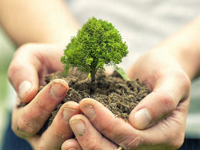 Plant trees to save water